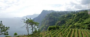 Reg's wine blog photo madeira grapes by the sea 2